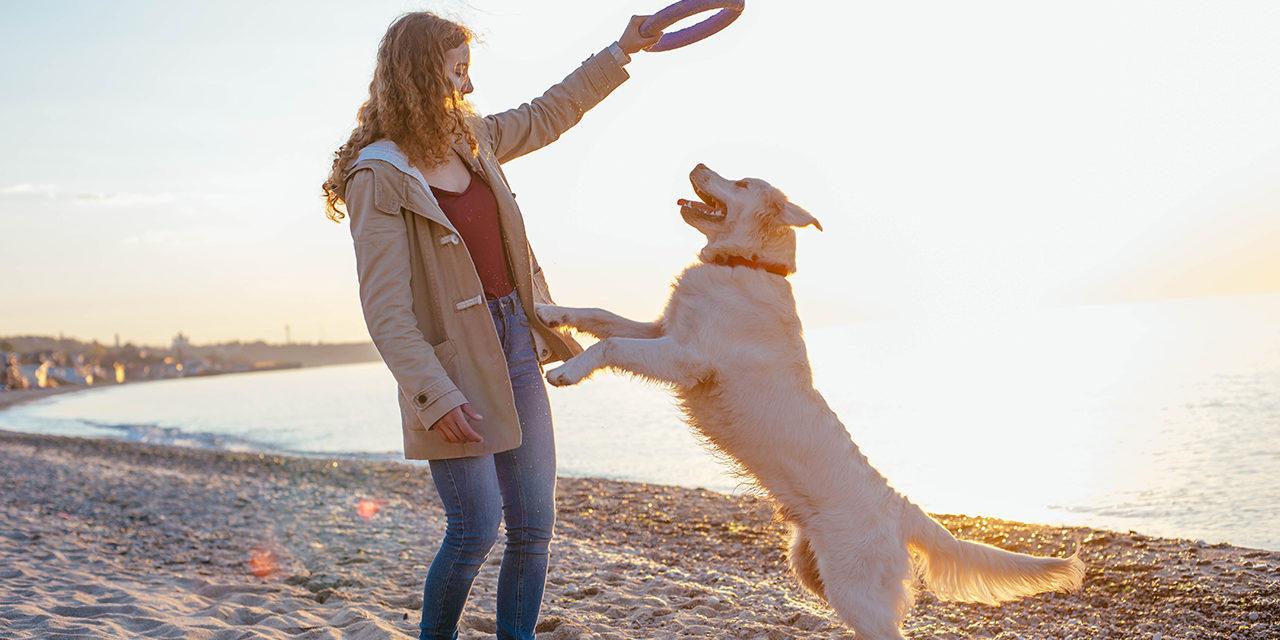 Jak stymulować mózg izmysły psa? (cz.1)