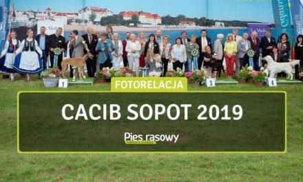 Wystawa Sopot 10-11 Sierpnia 2019 r.