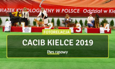 Międzynarodowa Wystawa Psów Rasowych Kielce 2019