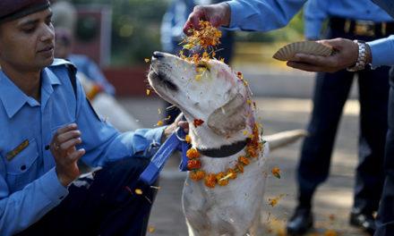 Festiwal w Nepalu w podziękowaniu psom za przyjaźń