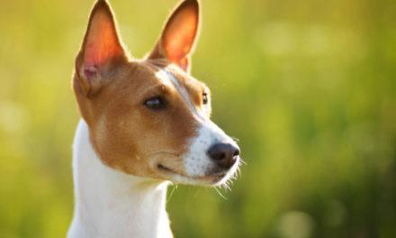 Jak pobudzać  mózg izmysły psa?