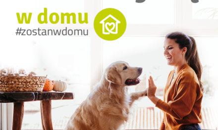 Co możemy zrobić z psem w domu czyli sposób na nudę?