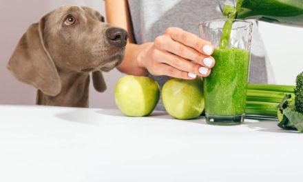 Chlorofil w diecie psów