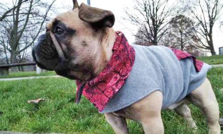 Bluzy dla psów PawPawPaw – jakość idesign!