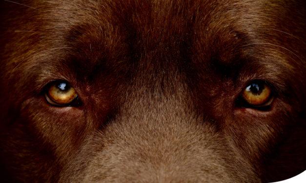 Jak pobudzać  mózg izmysły psa? (cz.2) Węch iwzrok