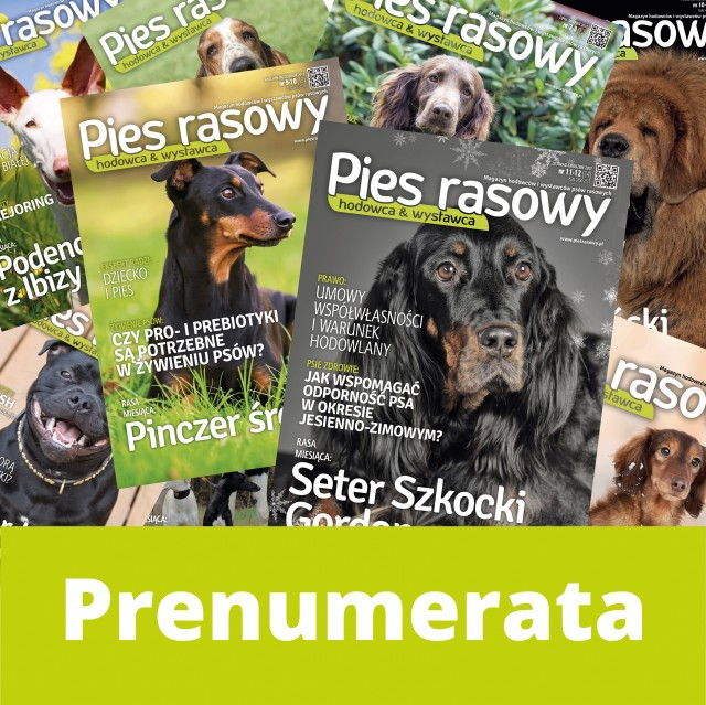 Prenumerata Pies Rasowy