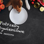 Potrzeby żywieniowe psa seniora