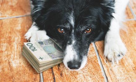 Opłata za psa!