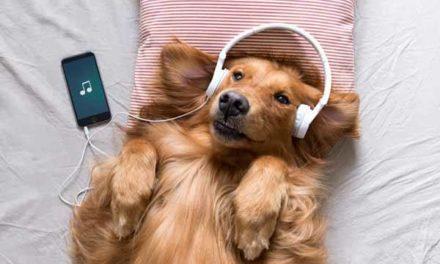 Playlista na Spotify dla zwierząt!