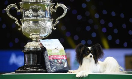 Spadek liczby zgłoszeń psów z zagranicy!