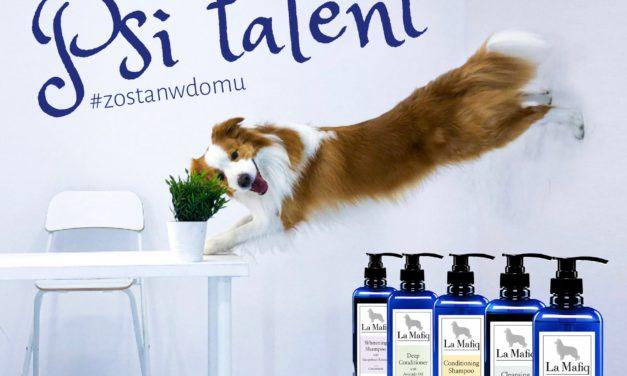 regulamin konkursu psi talent