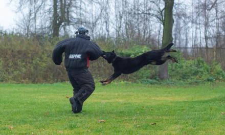 Pies w służbie policji z wizytą w Zakładzie Kynologii Policyjnej w Sułkowicach