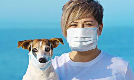 Czy Twój pies może zarazić się koronawirusem?