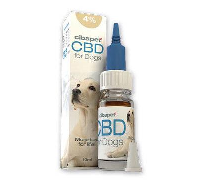 Olej CBD – na lęki i problemy zdrowotne u psów