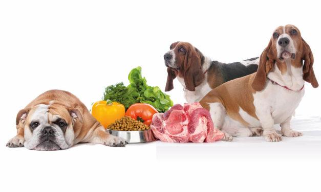 Fizjologiczne podstawy otyłości u psów