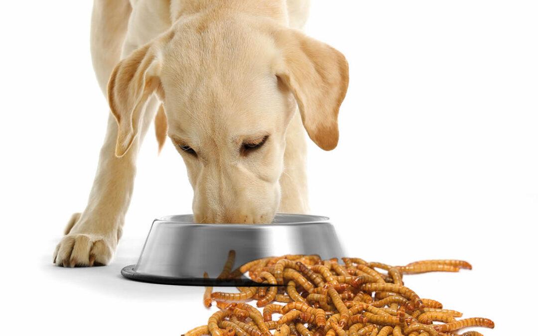 Owady gospodarskie. Nowe źródła białka zwierzęcego wkarmie dla psów