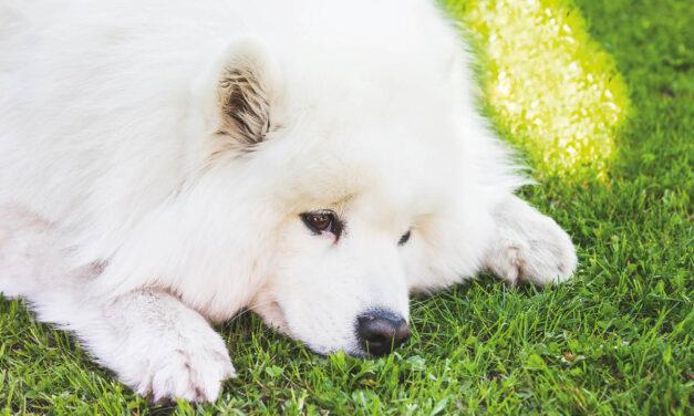 Wstydliwy problem…Psia Kupa