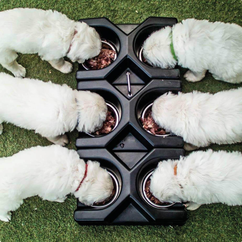 Malusiny – miski modułowe dla hodowców psów!