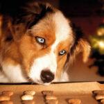 Tajniki psich przysmaków
