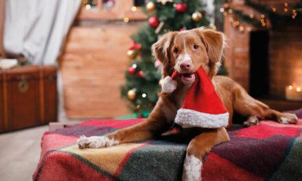 Jak przygotować psa do świąt isylwestra?