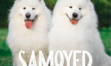 Samoyed–Uśmiechnięty pies Północy