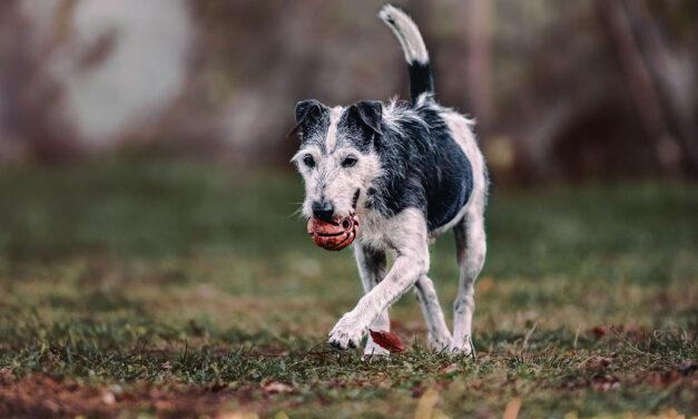 Psy na tropie śladów kryminalistycznych