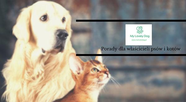 My Lovely Dog – Twój doradca