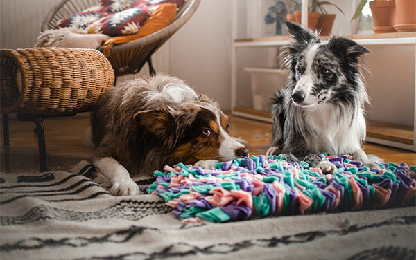 Mata węchowa Rewolucyjna aktywność dla psa
