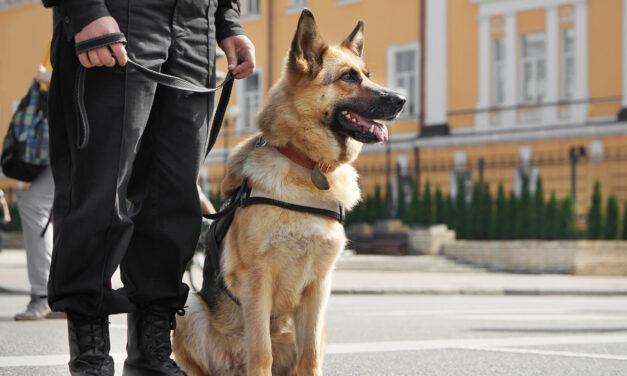 Emerytury dla psów służbowych już wkrótce?