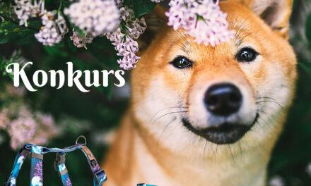 Regulamin konkursu: szczęśliwy pies