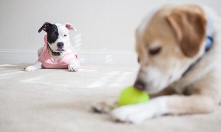 Czy psy mogą być zazdrosne?