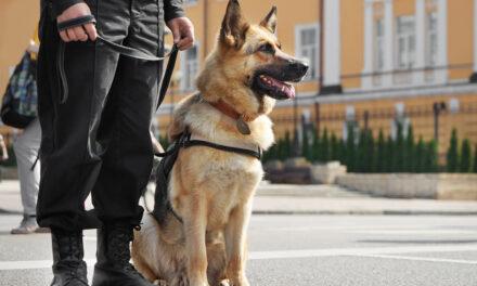 Emerytury dla psów (ikoni) służbowych już wkrótce?